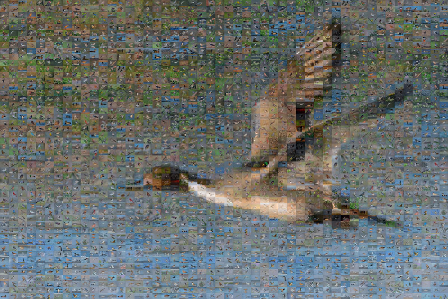 Northern Pintail Mosaic