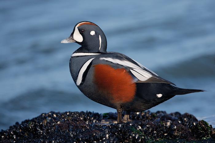 Tillamook Head Bird Life - Tillamook Head: Icon of the ... - photo#4