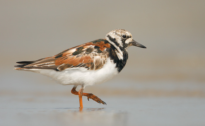 Sandpipers, The - Foursider