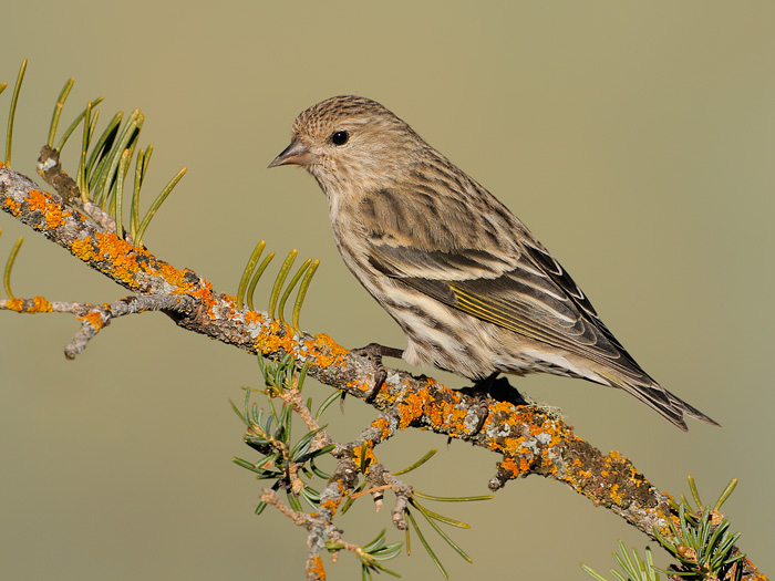 Amateur Observations Help Predict Vast Bird Migrations