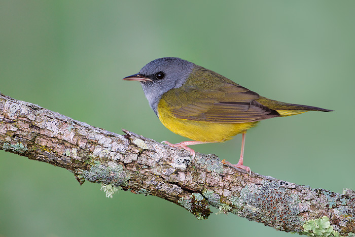 1000+ images about Perching Birds in Wisconsin on ...